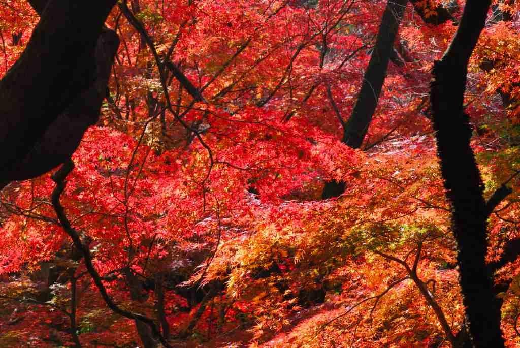 等々力渓谷 紅葉狩り