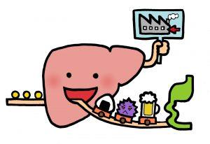 肝臓 アルコール分解 仕組み
