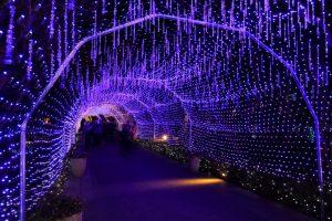 江の島湘南の宝石イルミネーション 光のトンネル